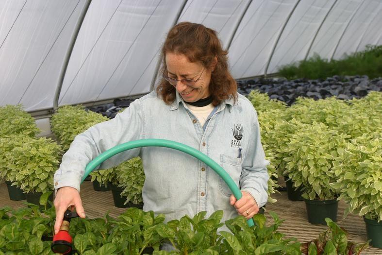 Local Horticulture Services Las Vegas NV Las Vegas NV