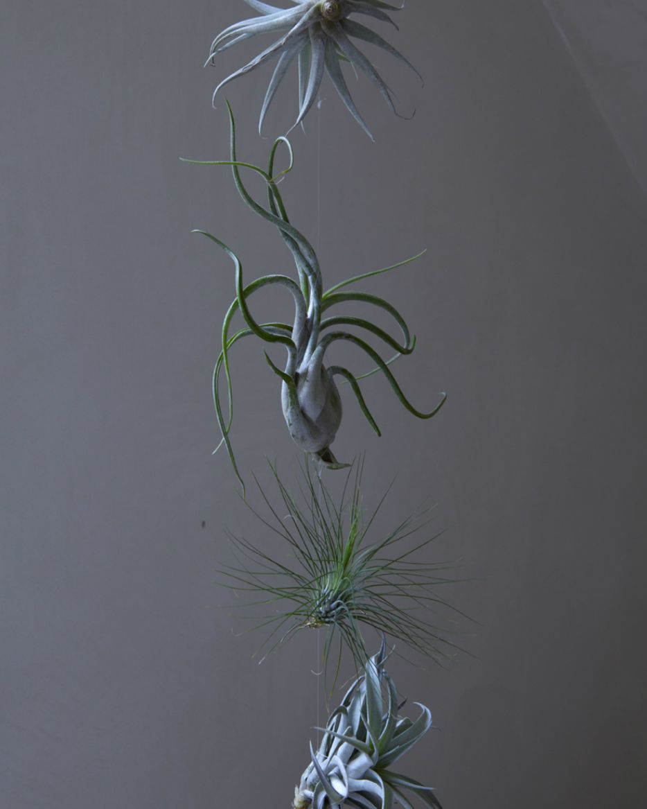 Perfect Air Plant Hanging Sculptures, Still Life Objets, Gifts UPDATE   Improvised  Life