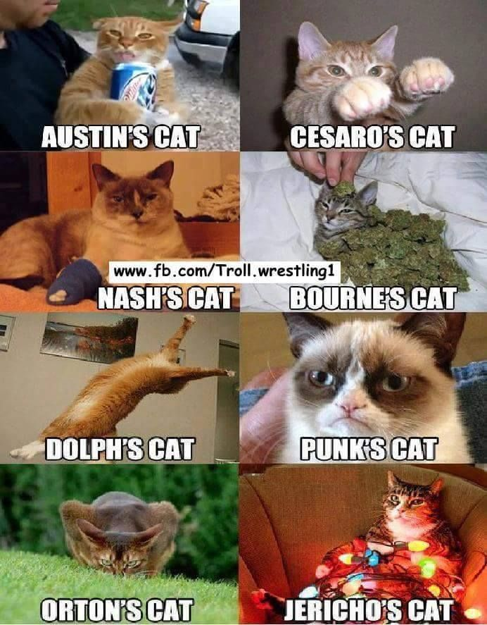 WWE Cats (Picture)