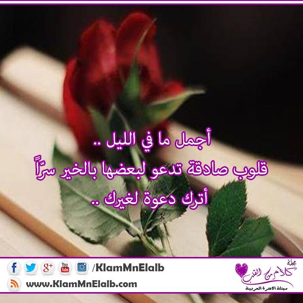 شبكة مصر أجمل ما في الليل قلوب صادقة تدعو لبعضها بالخير Plants