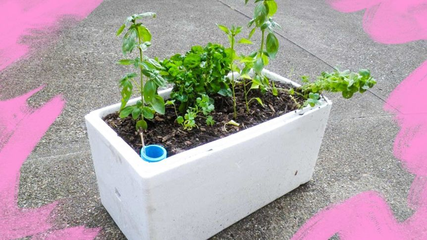 Turn A Styrofoam Box From The Grocers Into A Self Watering Planter