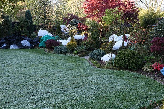 Frost before the open day sunshine! | For the garden open da… | Flickr