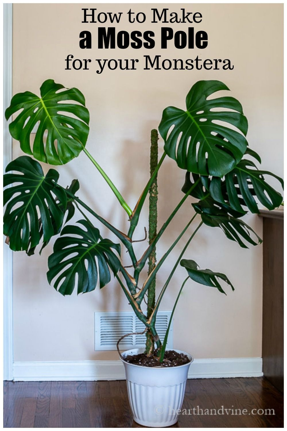 How to make a moss pole for your monstera plant plants