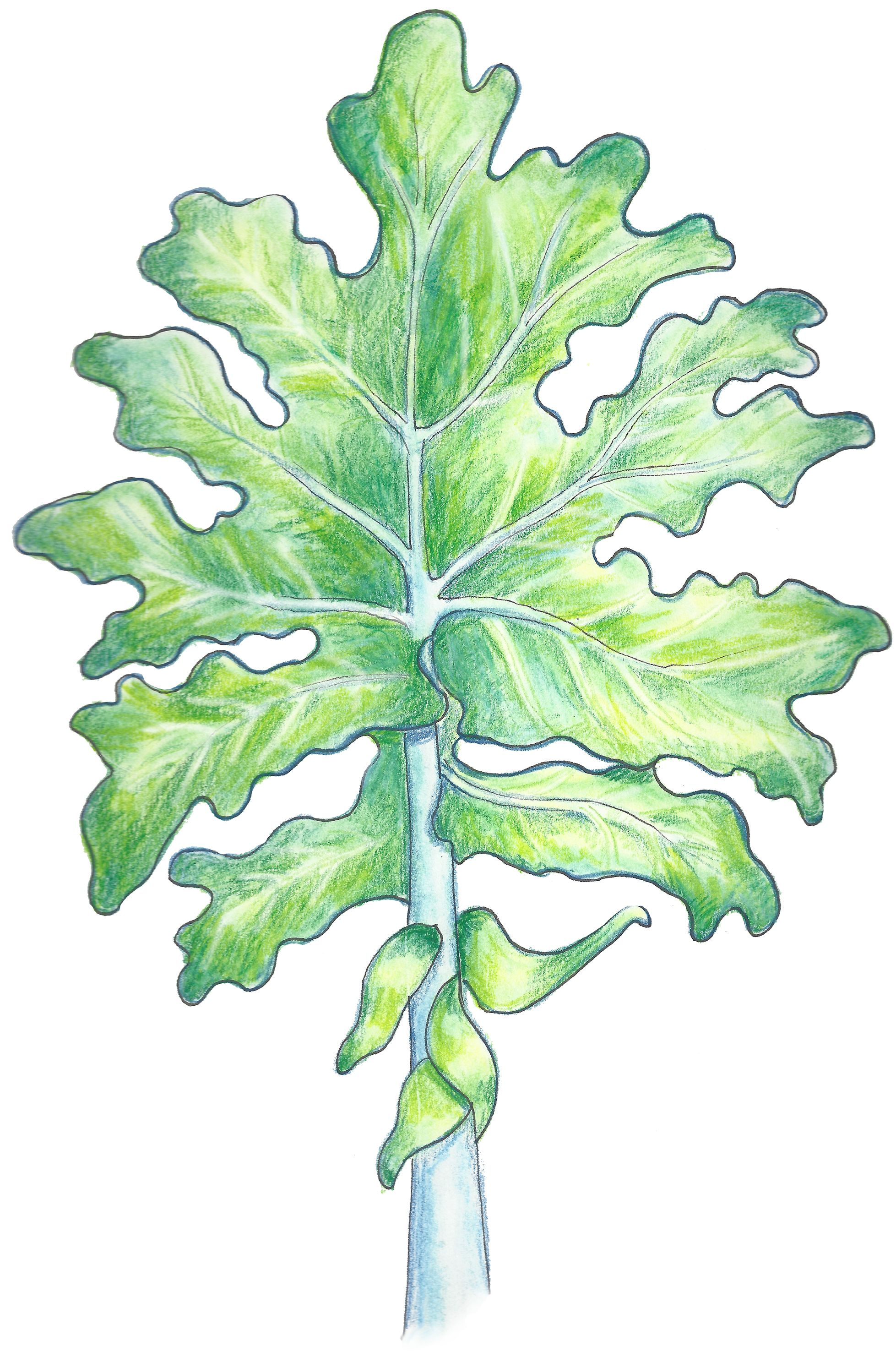 Karen\'s Kale\