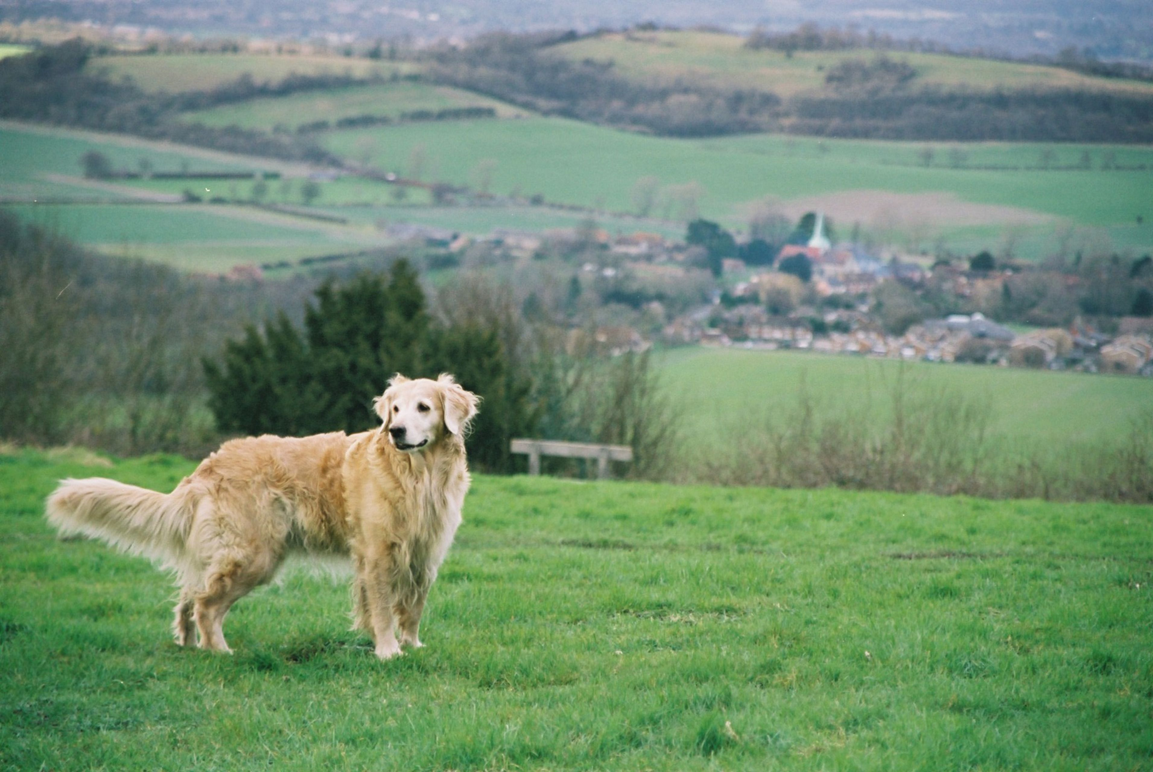 On Harting Down, west sussex Dogs, Animals