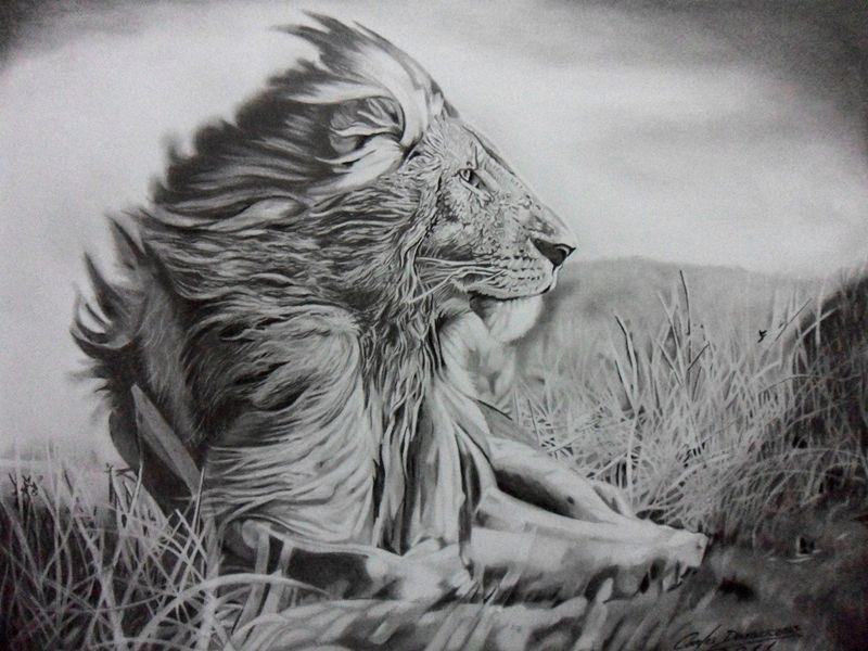 Resultado De Imagem Para Desenho Realista De Lobo