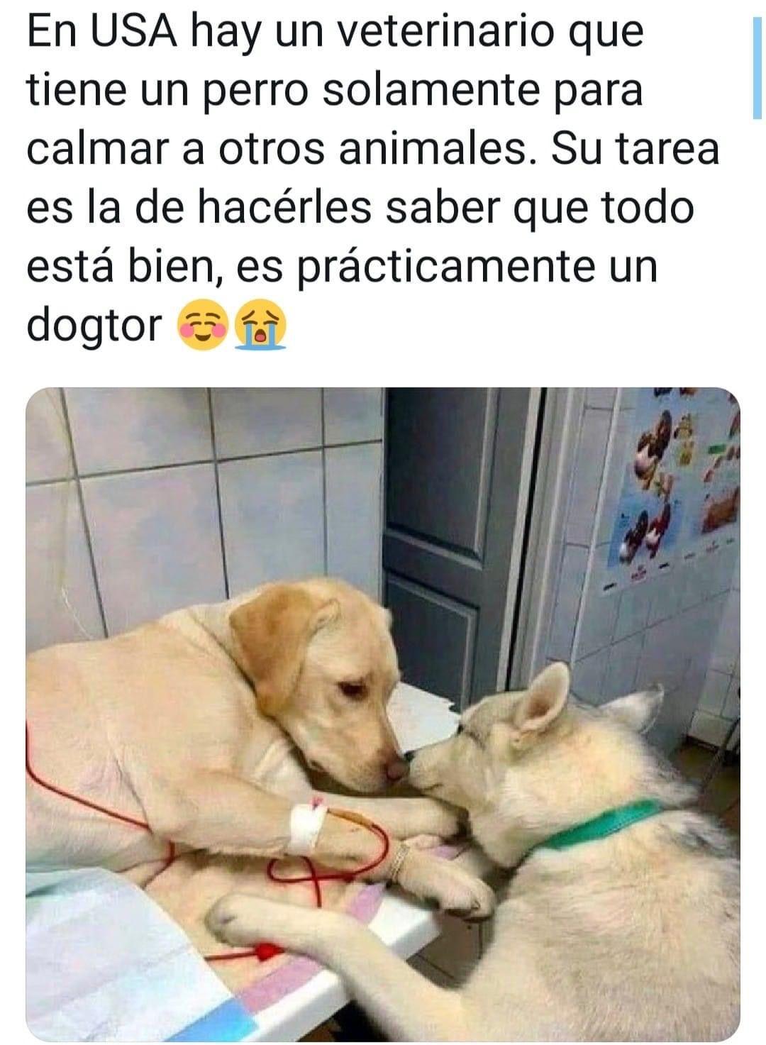 Pin De Pao En Memes Perros Animales Veterinaria