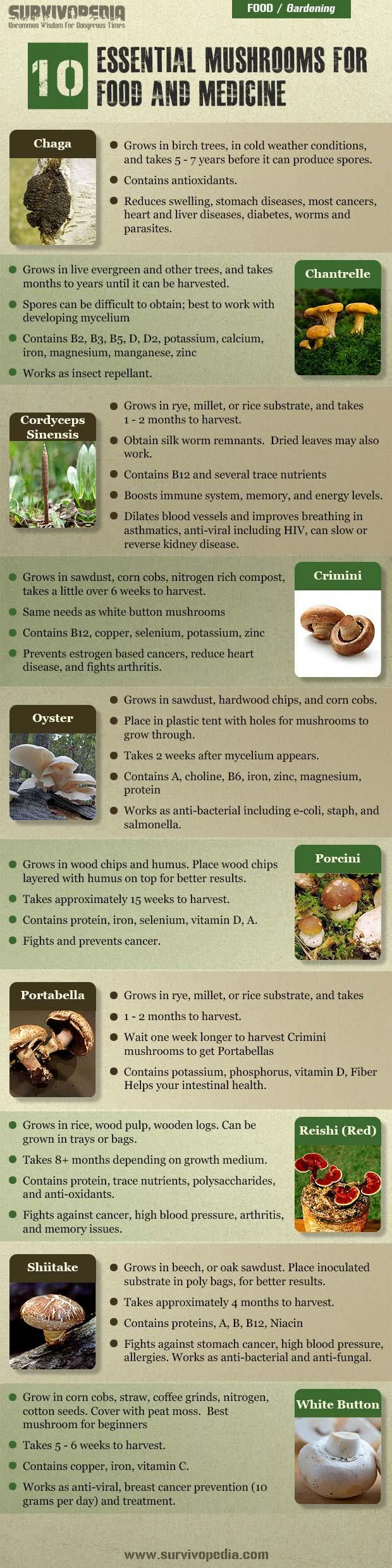 how to start your own oyster farm
