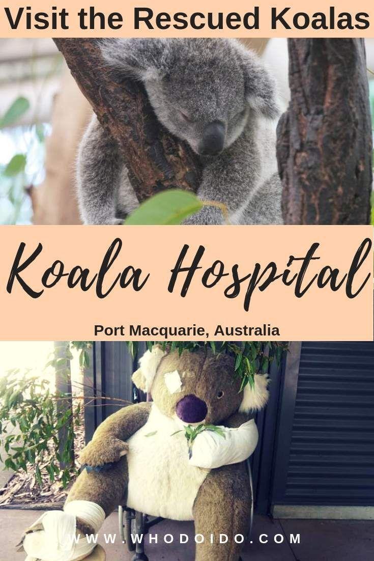 17++ Animal kingdom pet hospital ideas in 2021