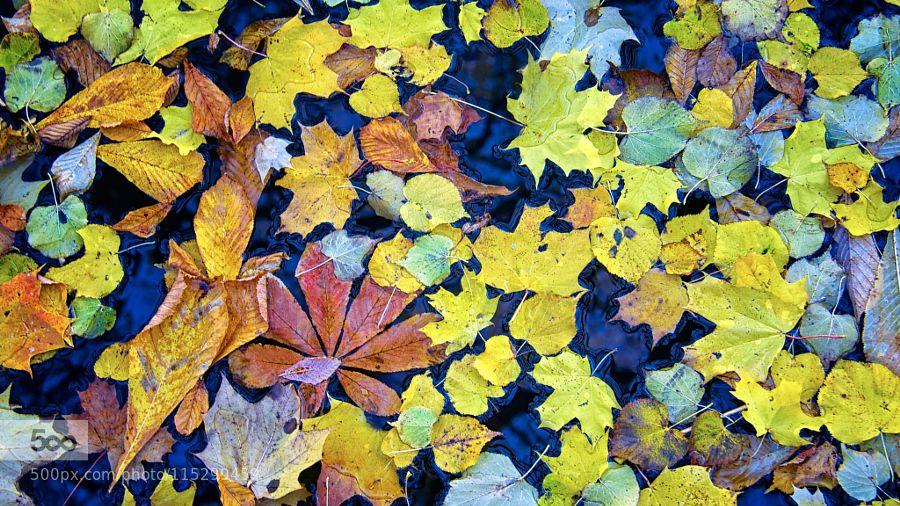 Puzzle by Citrum #nature