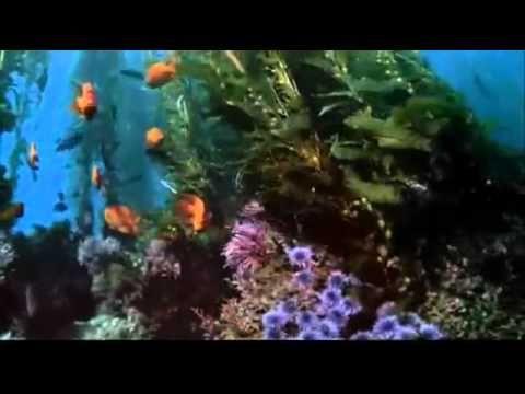 Jean Michel Jarre - Waiting for Cousteau (En Attendant Cousteau)