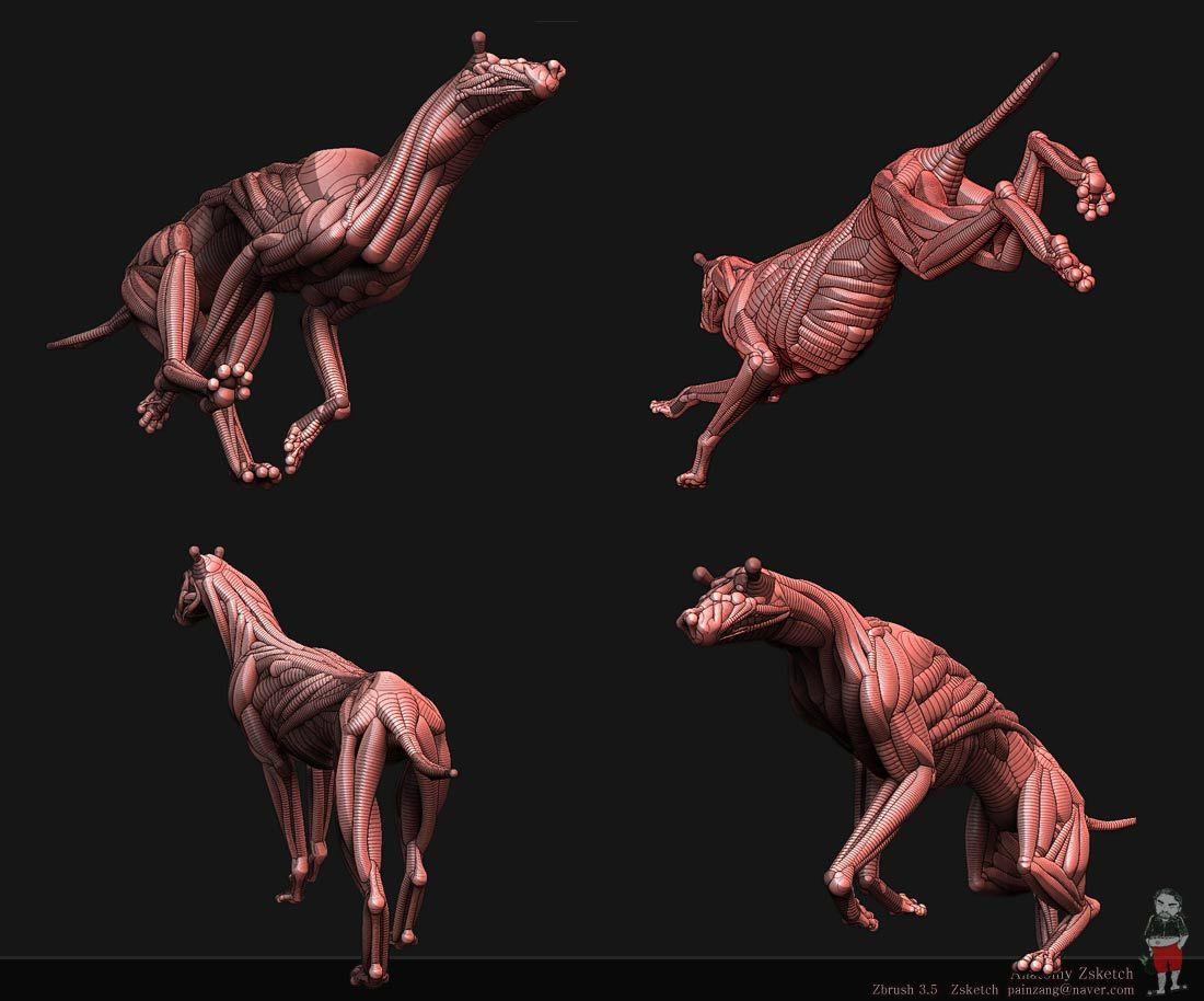 월향백화 :: [Zbrush] Anatomy Zsketch | 사진 | Pinterest | Anatomía ...