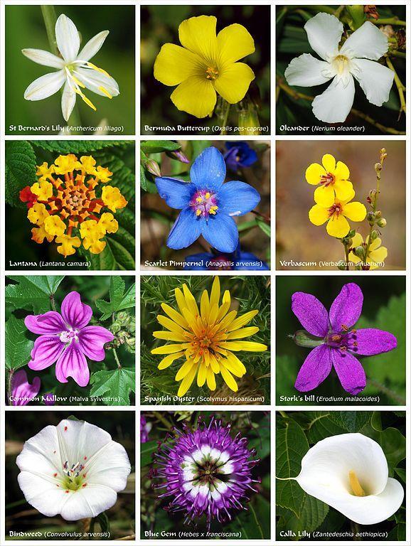 Nama Bunga Dalam Bahasa Inggris Menanam Bunga Menanam Bunga