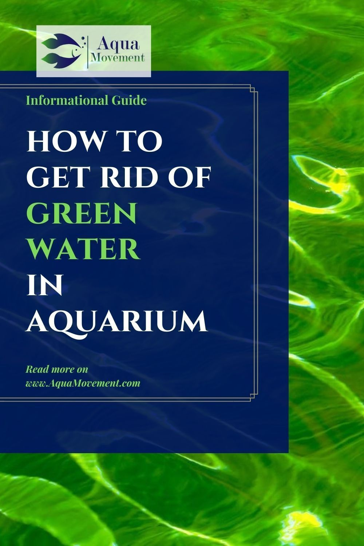 How To Get Rid Of Algae In 2020 Fresh Water Fish Tank Fish Tank Saltwater Tank