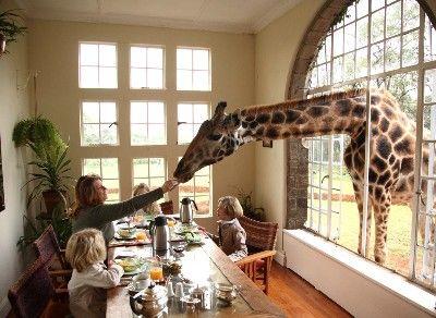 aussergew hnliche hotels the giraffe manor beim. Black Bedroom Furniture Sets. Home Design Ideas