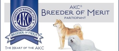 Akc Breeder Of Merit Showboat Kennels Coton De Tulear Puppy