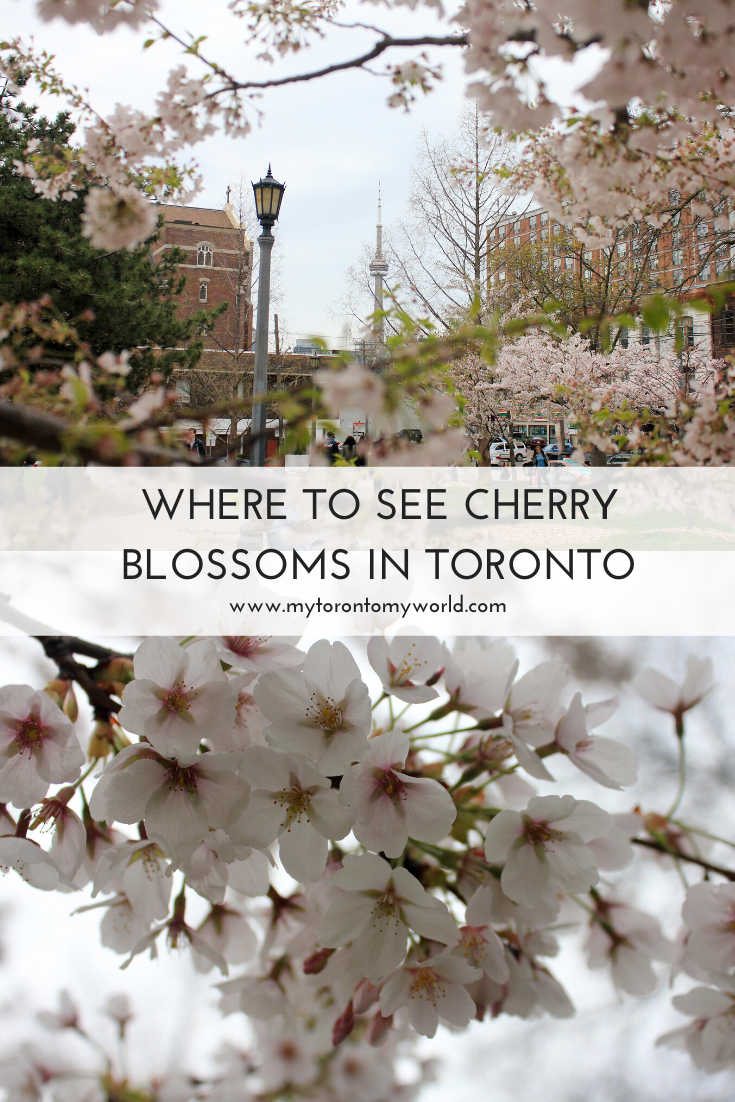 17 Places Where You Can See Cherry Blossoms In Toronto Cherry Blossom Blossom Blossom Trees