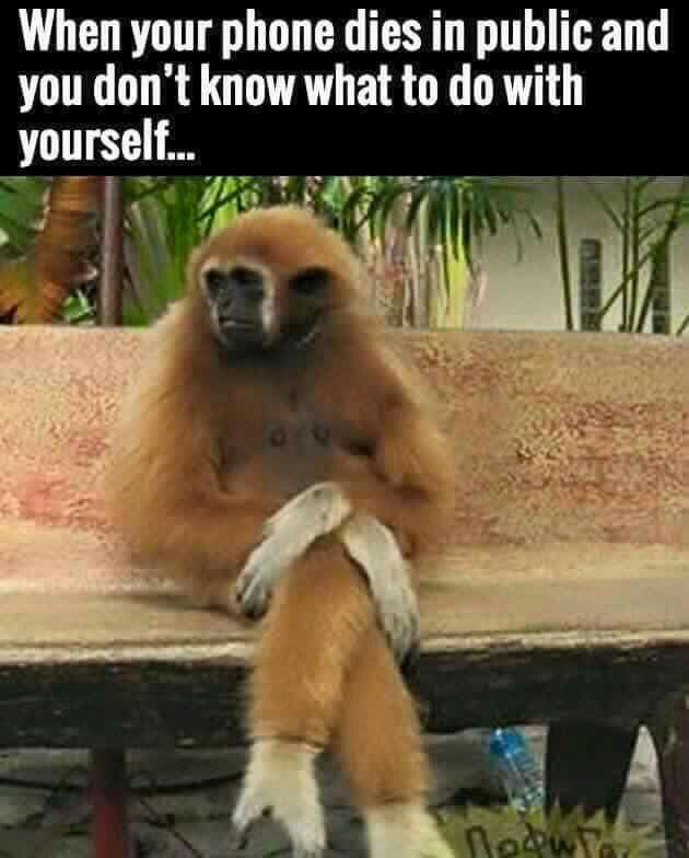 When Your Phone Dies In Public And You Don T Know What To Do With Yourself Monkeys Funny Funny Animal Pictures Funny Animal Memes