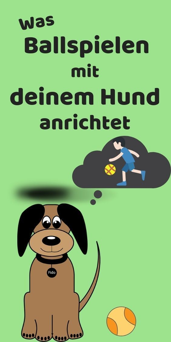 Balljunkies Wenn Spielen Zur Sucht Wird Meinhund24 Ball Spiele Hunde Ball