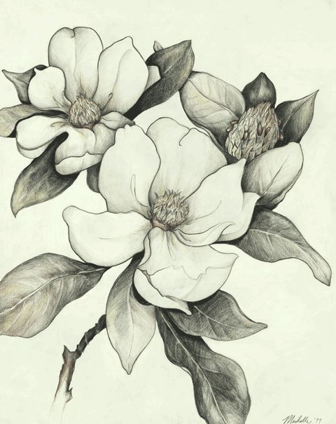 Steel Magnolias Pencil Drawings Of Flowers