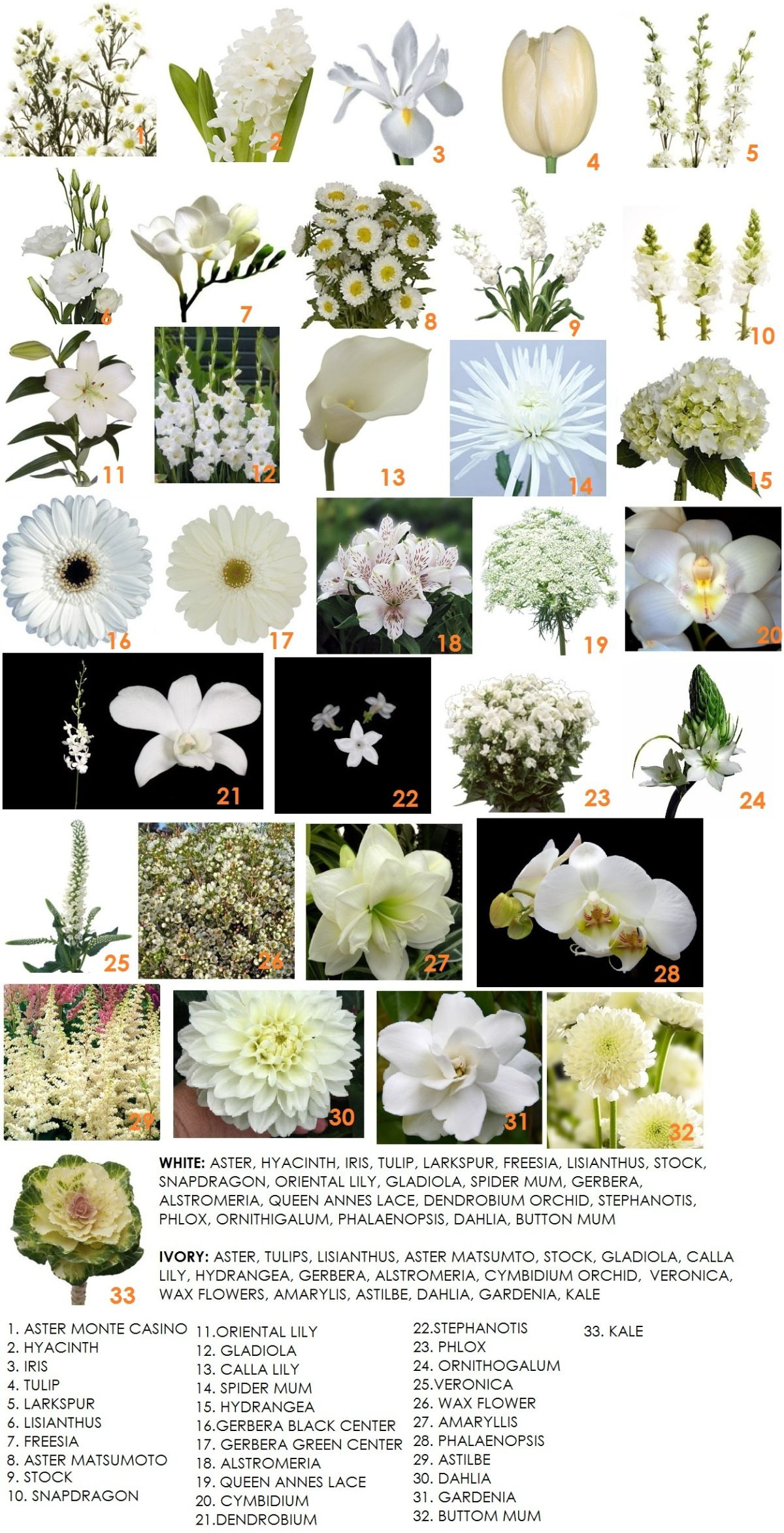 Brides N Blooms Wholesale Flowers in Bulk, Wedding Flowers, Fresh ...
