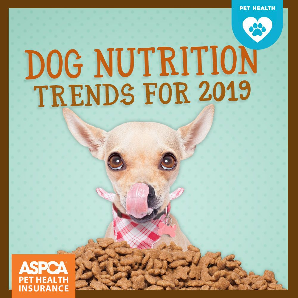 Dog Nutrition Trends For 2020 Dog Nutrition Food Animals Pets