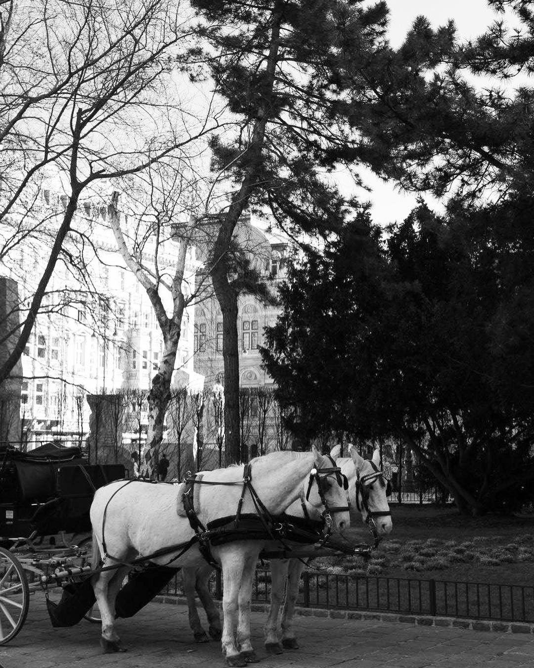 clipclop horse vienna wien - Must See Wien