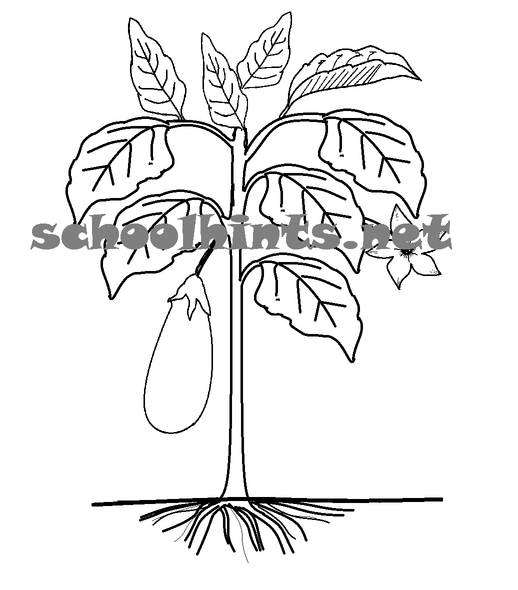 A Plant Has Parts That Help It Grow A Plant Has Roots Stem Flowers Fruits Seeds And Leaves