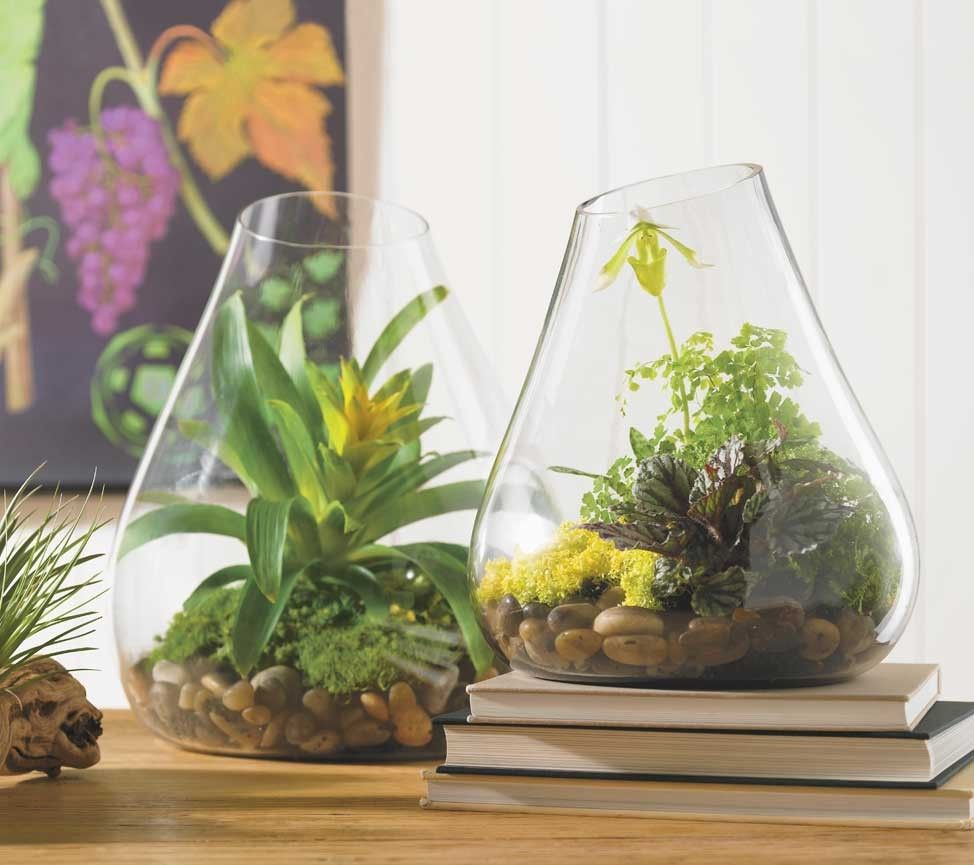 Glass Terrarium   Oversized Glass Bubbles, Free Blown Without A Mold, Are  Hand Part 55