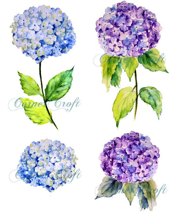 Hand Painted Watercolour Blue Hydrangea Digital Clipart Printable Instant Download Scrapbook Watercolor Watercolor Flowers Paintings Flower Drawing Hydrangeas Art