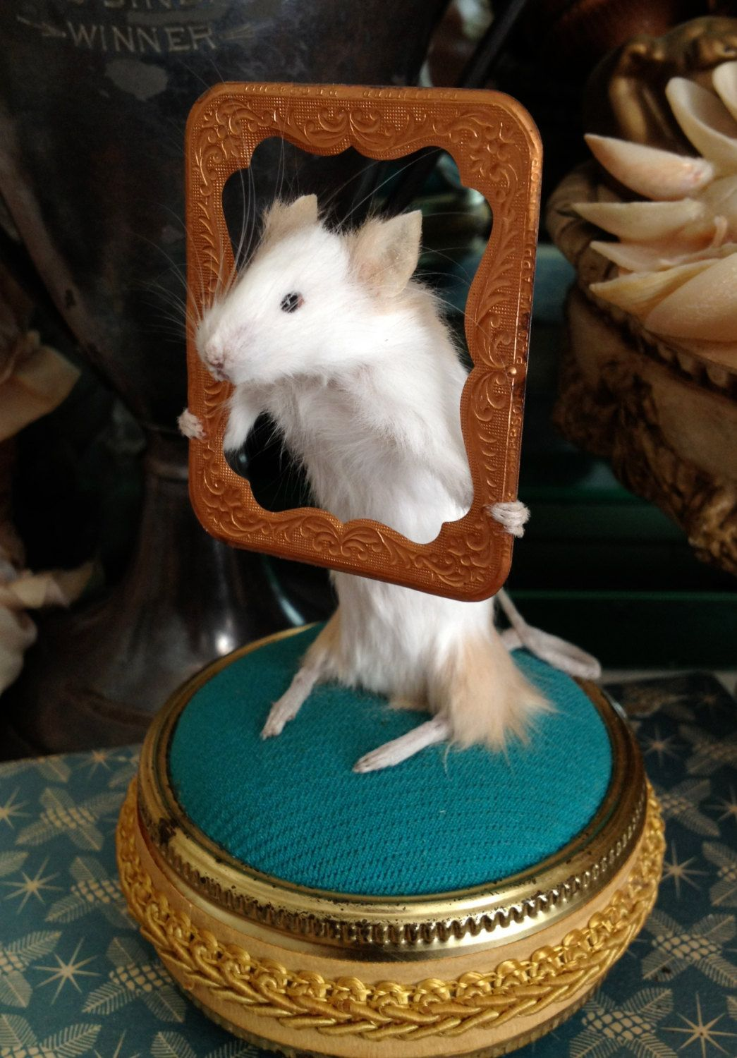 ❥ Meet Jessie James And I Do Believe He Has Been Framed Taxidermy Mouse With Antique Frame