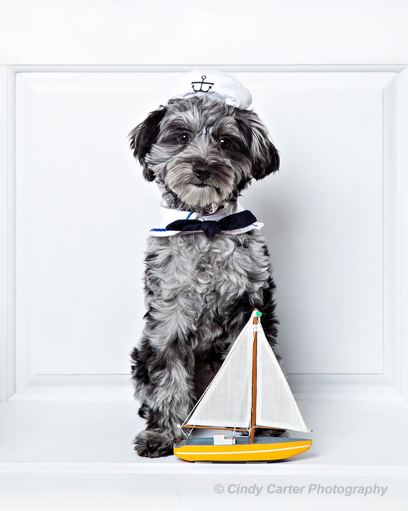 Sailor Dog by Cindy Carter on 500px