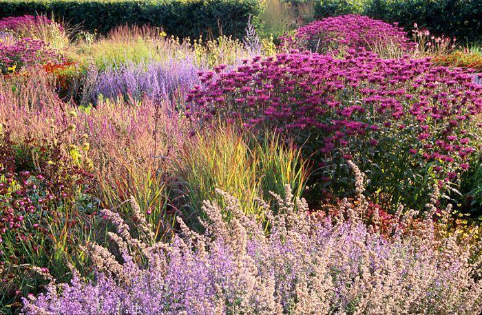Scampston Hall, UK, perennial meadow, design Piet Oudolf ...