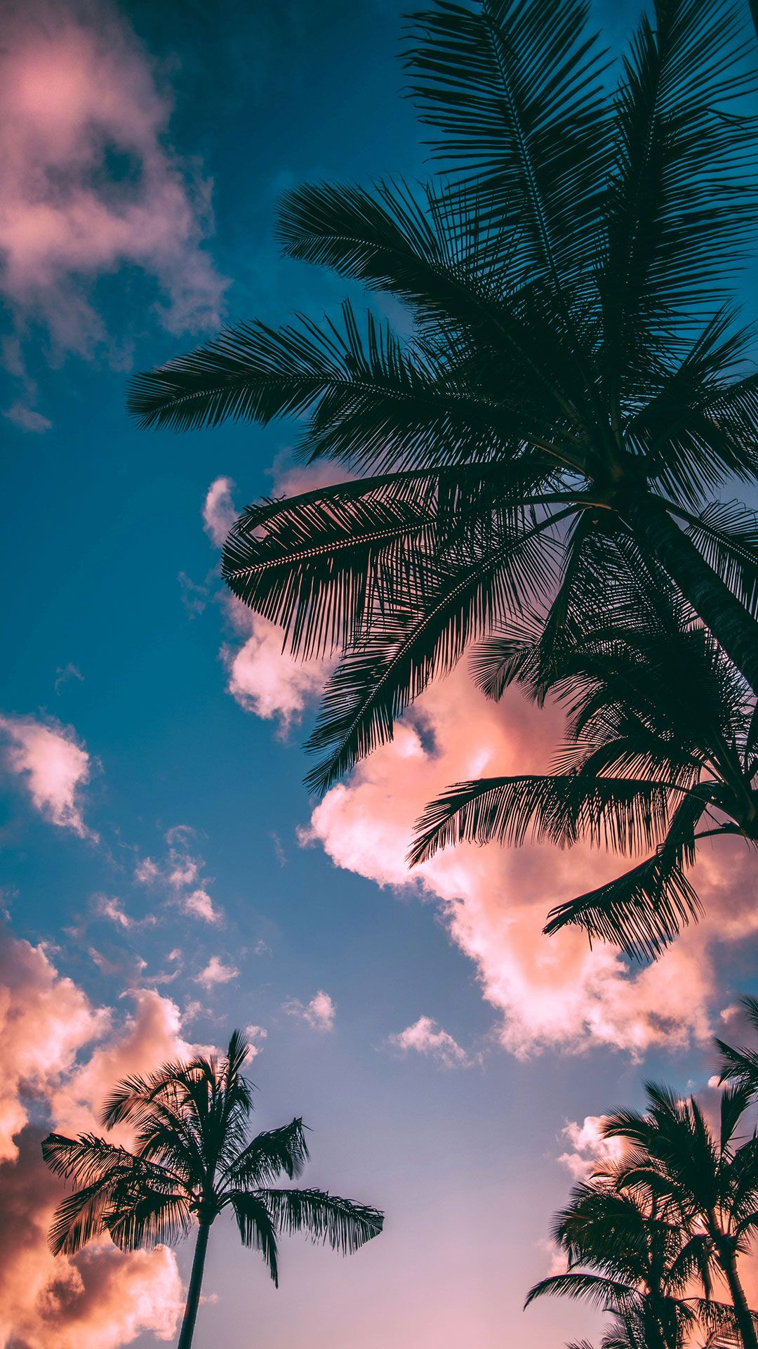 116 (Free) Beach Wallpapers for Your Phone & Desktop