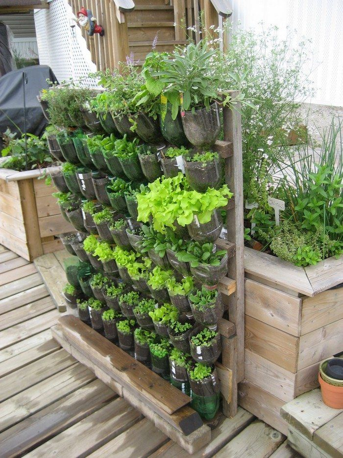 Build a vertical garden from recycled soda