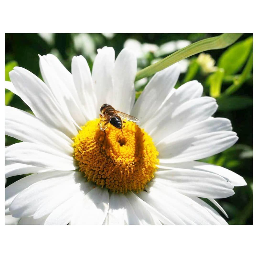 Nature #floweraddict explore Pinterest