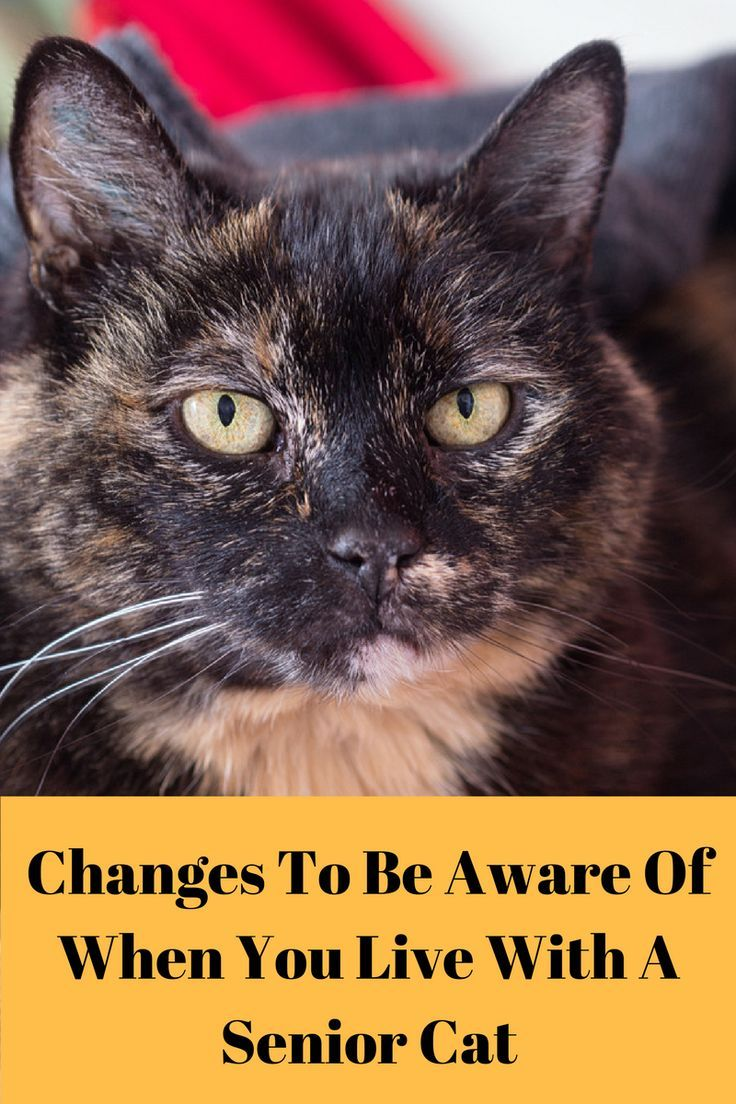 Senior Cat Changes To Be Aware Of Senior cat care