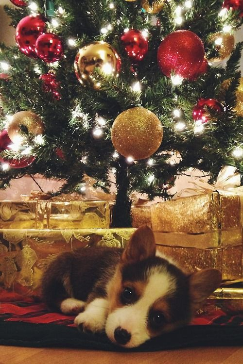 A Special Present Under The Tree Christmas Puppy Christmas