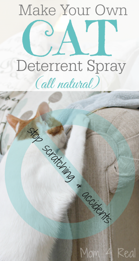 Repellant Sprays And Cat Scratching