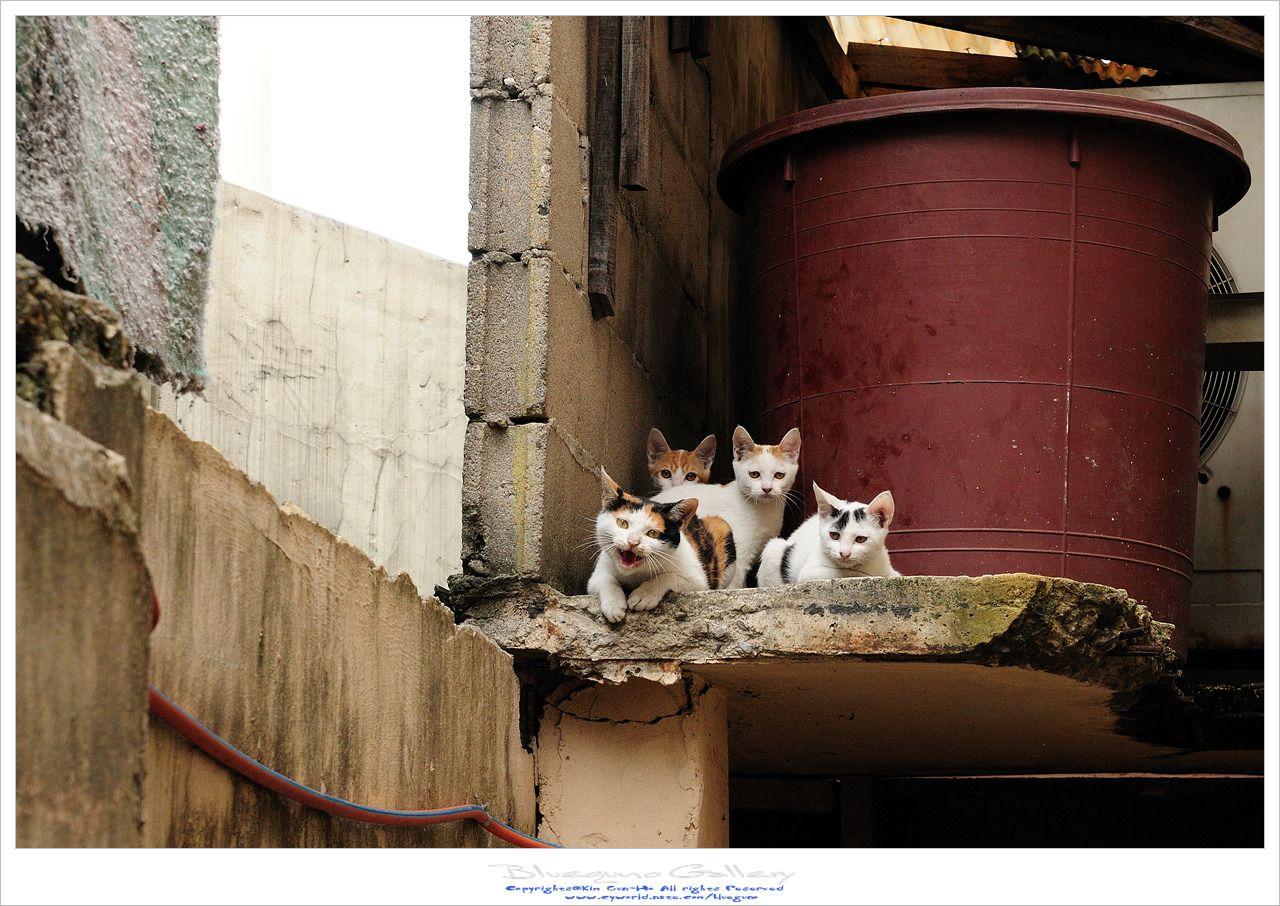 고양이가족  -포항