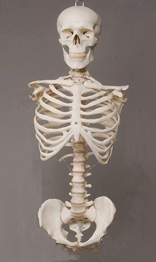 Life Size Skeleton Halloween Decoration Halloween Haunted House Prop - life size halloween decorations