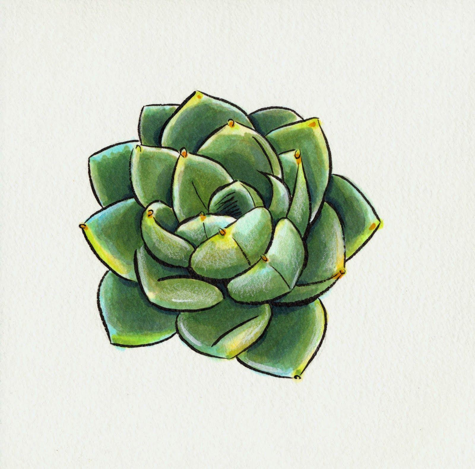 Materials kaimai sol k ink copic sketch markers various watercolors caran d 39 ache pablo - Cool succulent plants ...