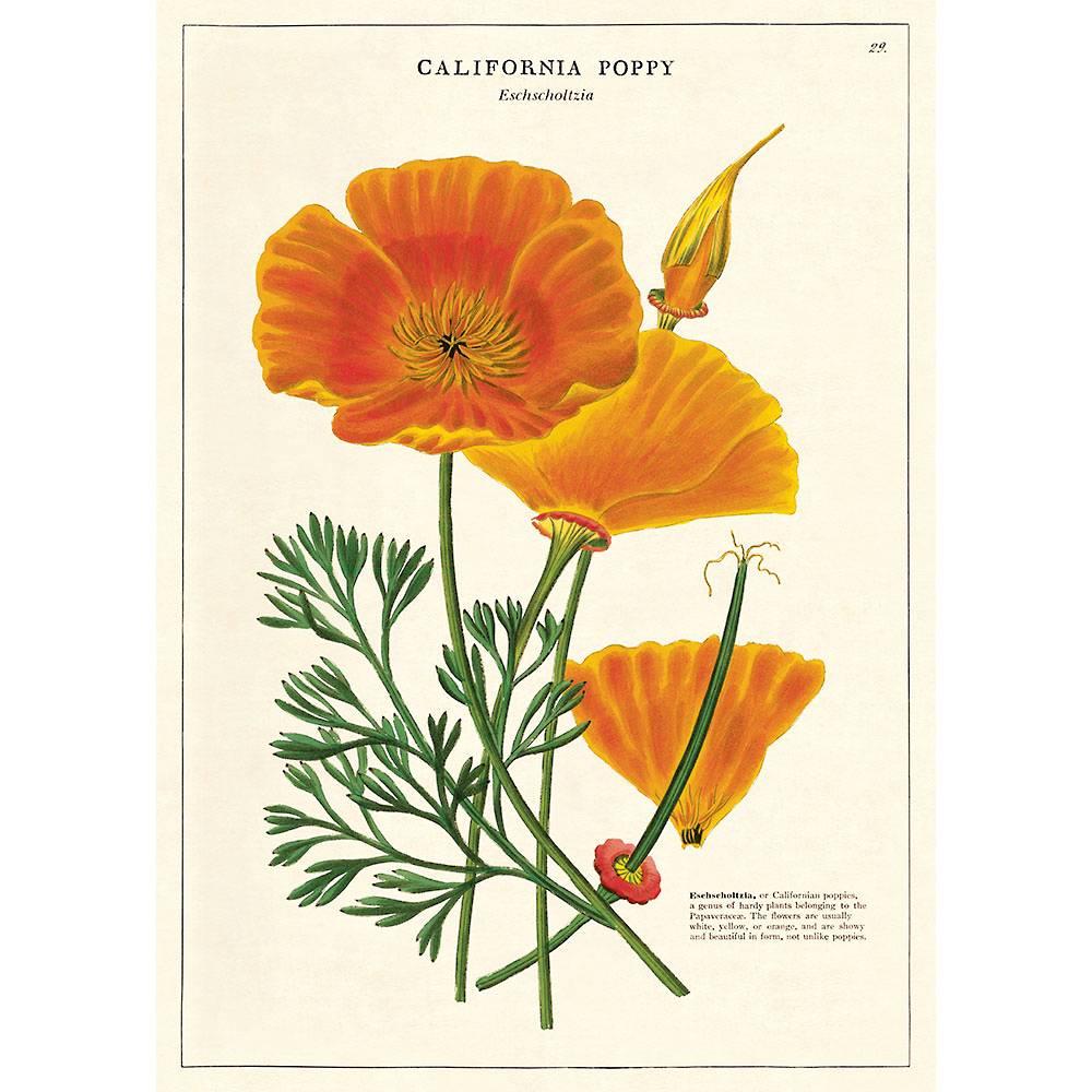 Art Nouveau Inspired California Poppy By Mason Larose: California Poppy Flat Wrap In 2020