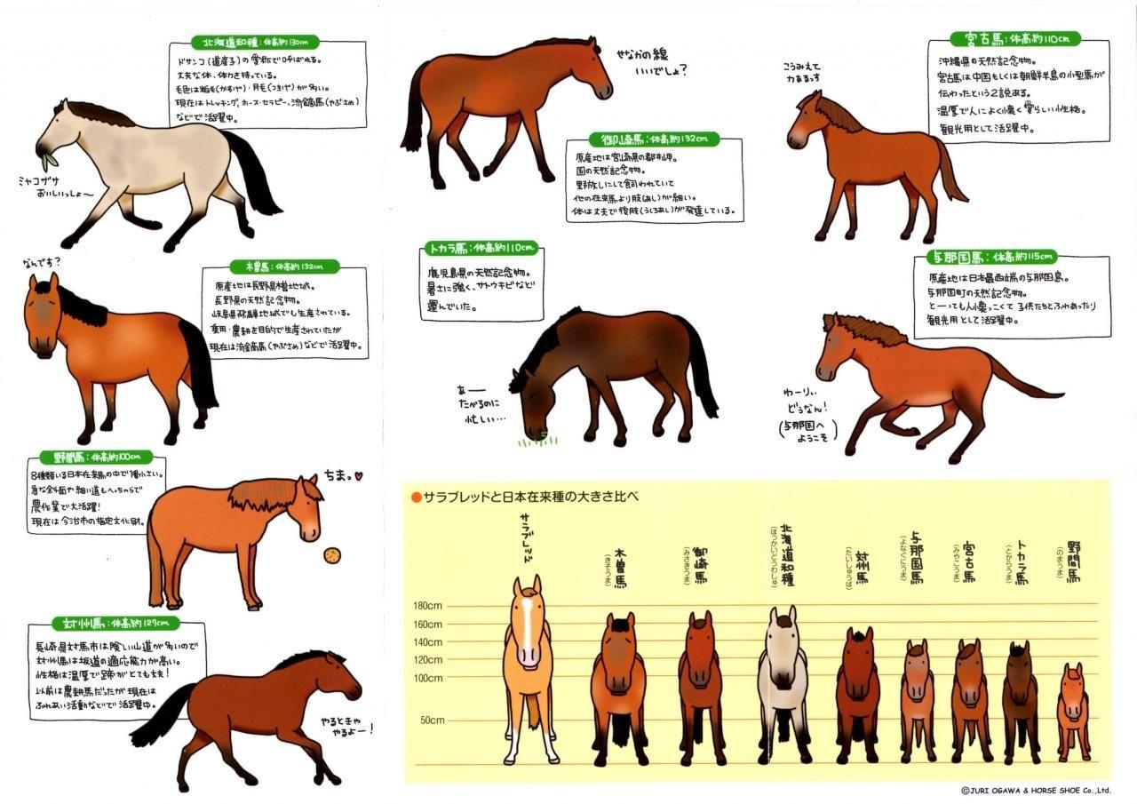 馬の博物館 横浜市電保存館 本牧 根岸 磯子 旅行のクチコミサイト フォートラベル 与那国 木曽 旅行