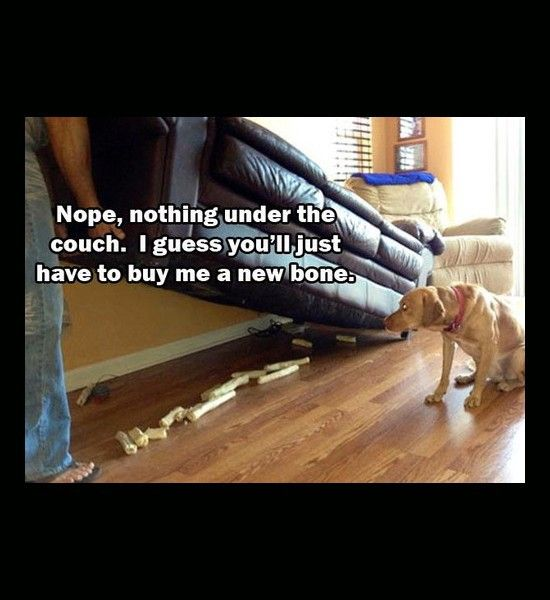 Funny Photos Dog Bones Under Couch Funny Animals Funny Animal
