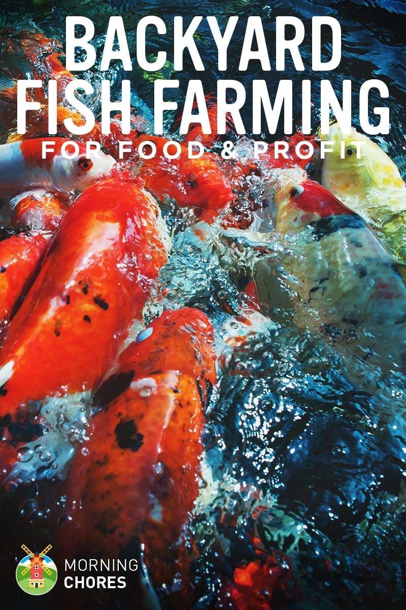 Backyard Fish Farming How To Raise Fish For Food Or Profit At Home Fish Farming Backyard Farming Hydroponic Farming Backyard fish farming for profit