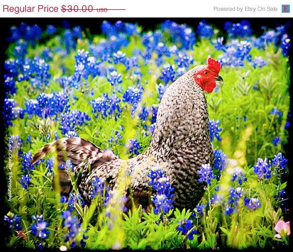 Shopwide Sale  Roosters and Bluebonnets  Texas by slightclutter