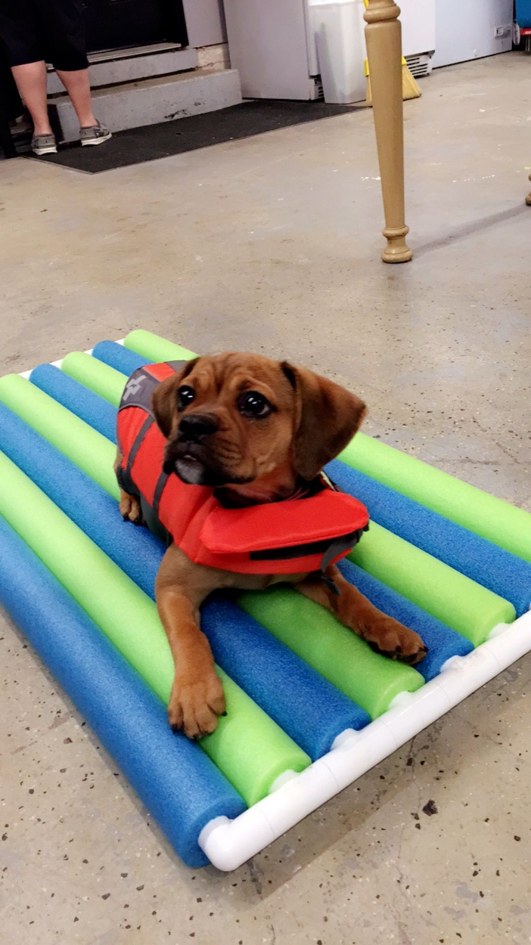 Made Callie A Little Raft Out Of Pvc And Pool Noodles Dog Pool Diy Dog Stuff Pool Noodles