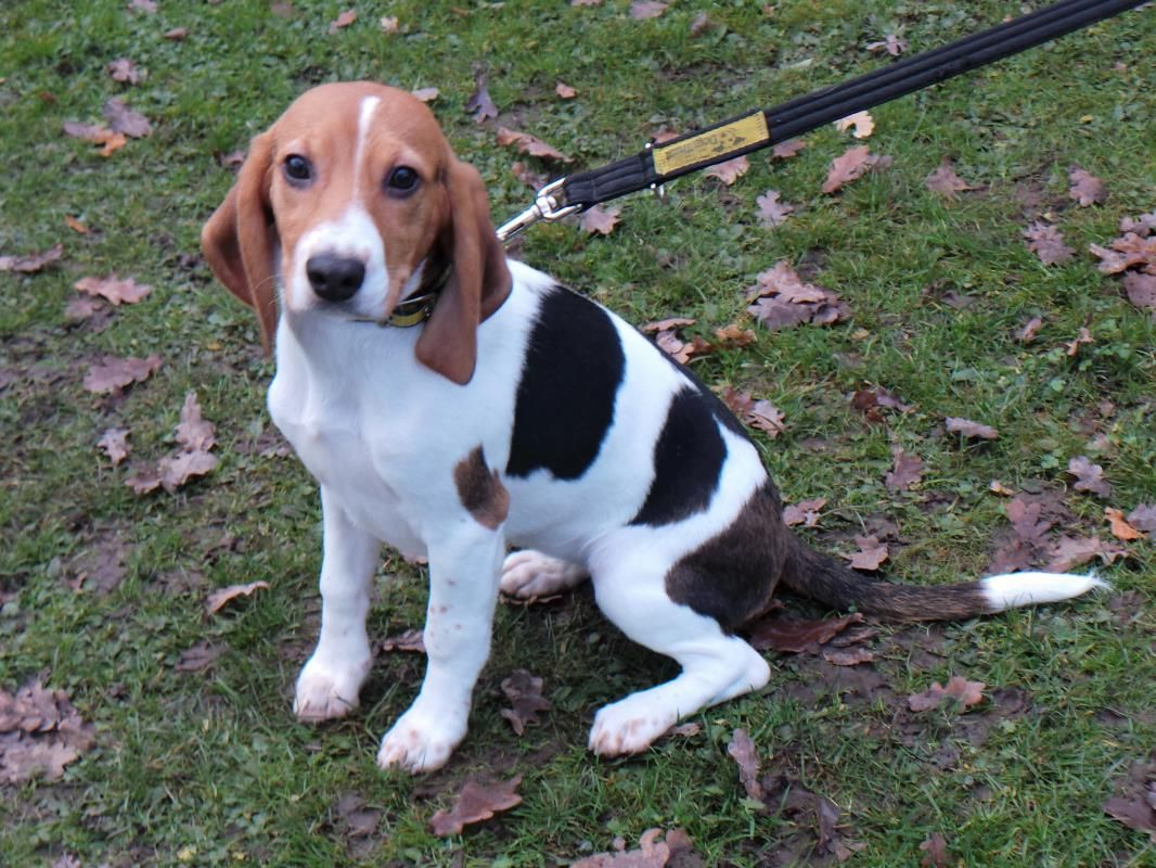 Ivy Dogs Trust Dogs Beagle Dog