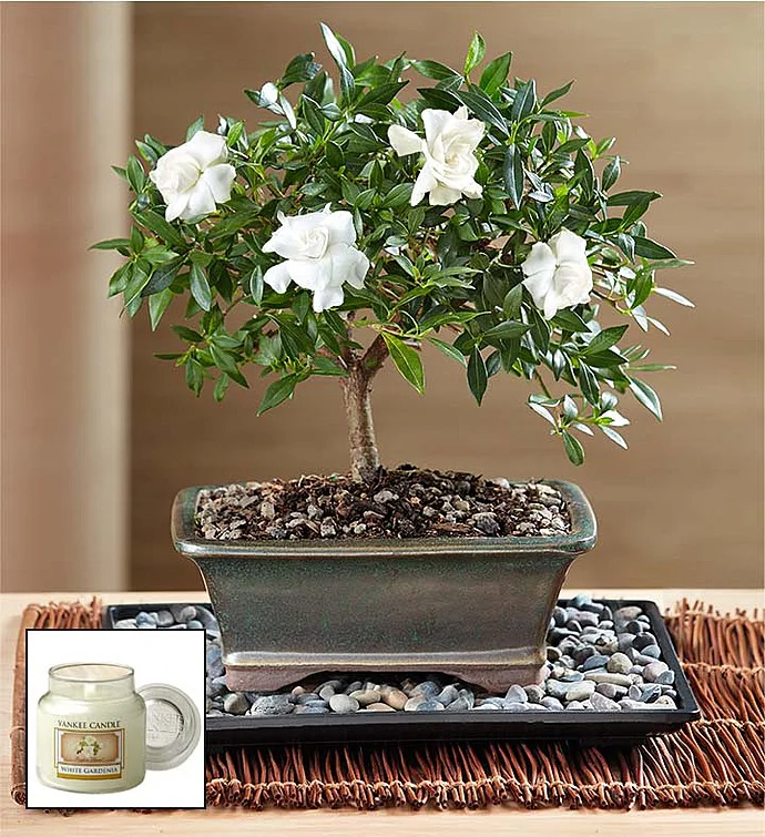 Pin On Seasonal Tablescapes Mantlescapes